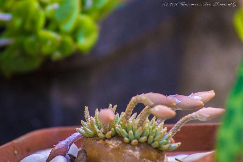 avonia-sp