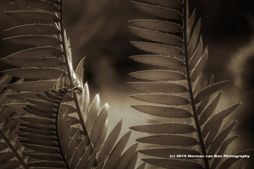 cycad27oct15