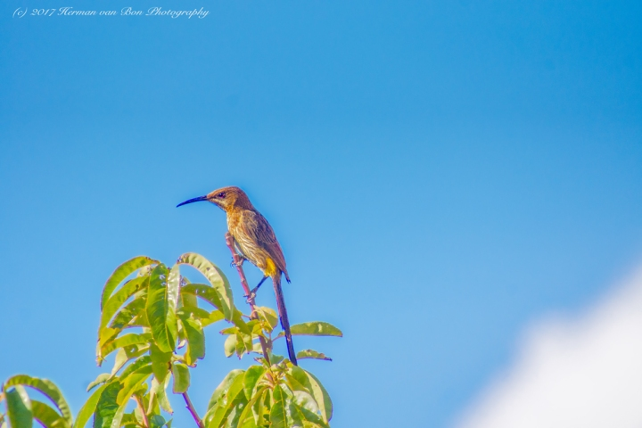 bird28jan17