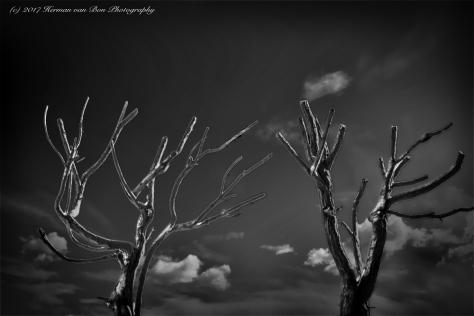 landscape-minimalism2