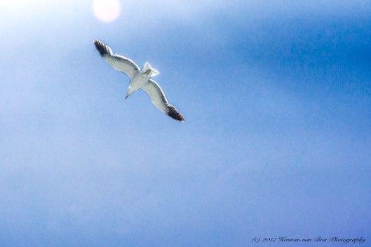 sun-flight