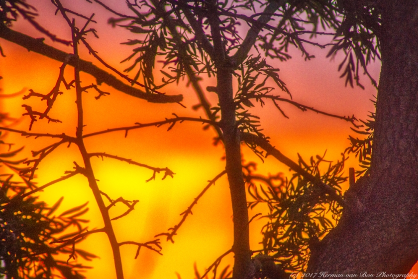 sunset-in-the-tree28jan17