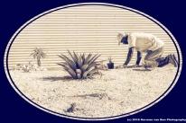 hommage-pour-le-jardinier
