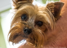 portrait-of-yorki