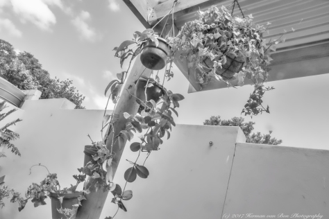 stoep-plants