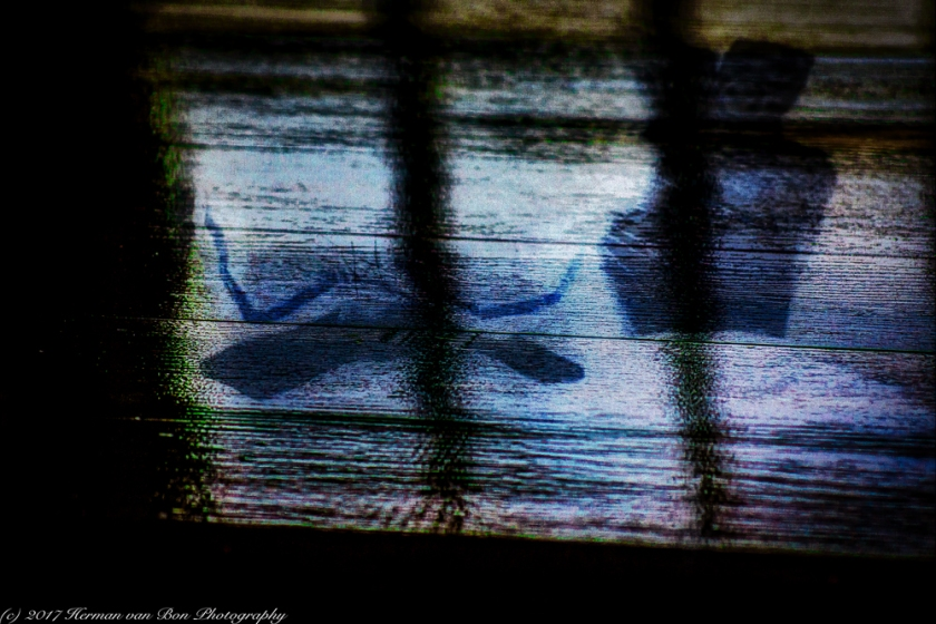 wood-reflection