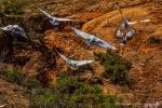ibis flight