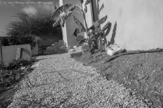 garden20may17-5
