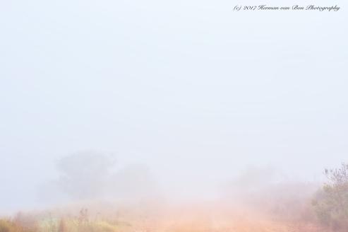 misty-landscape-7