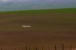 ibis29june17-1