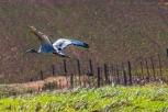 ibis29june17-2