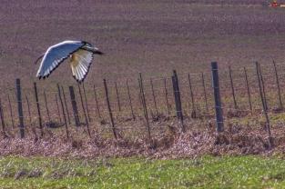 ibis29june17-3