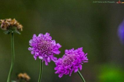 LF-flowers3