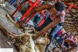 shearing3