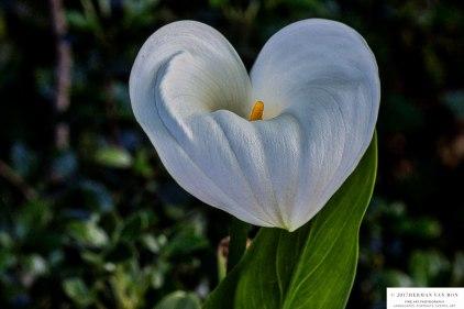 10ct17flower1