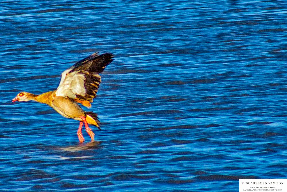 duck28oct17-1