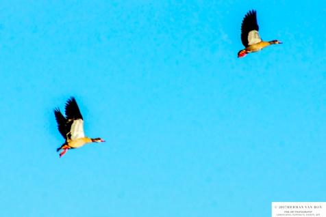 duck28oct17-3