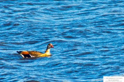 duck28oct17-4