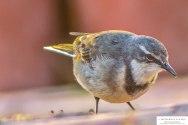 good-morning-bird