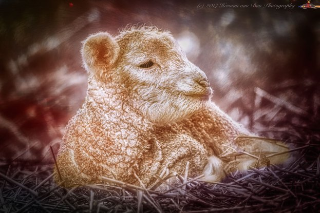 silence-of-the-lamb-revisited