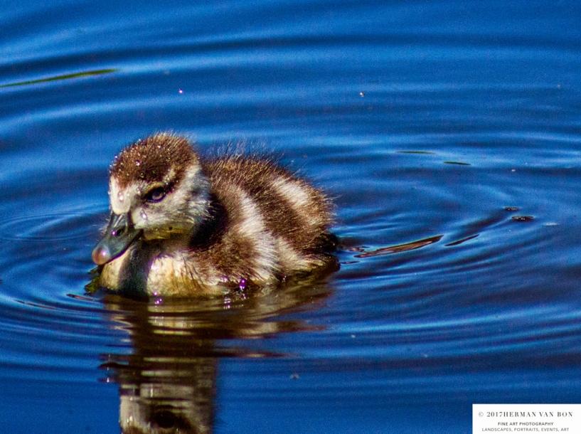 duckday2-2