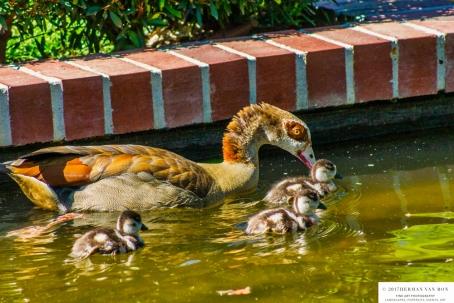 duckday2-3