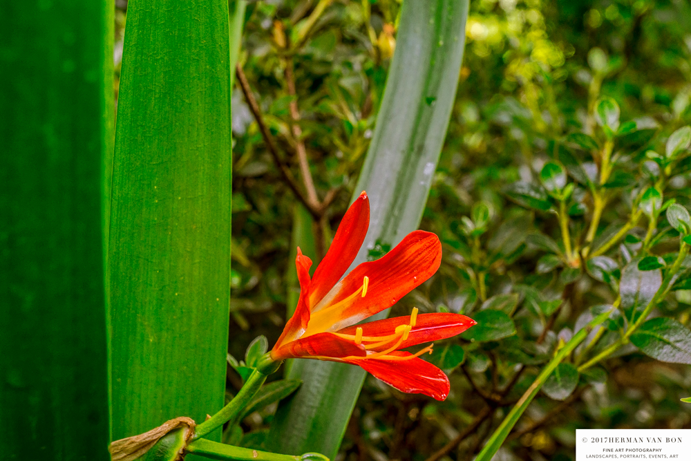 garden-lourensford5