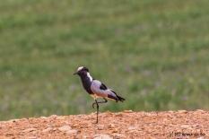 bird12dec17-1