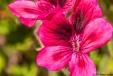 gardendetail1