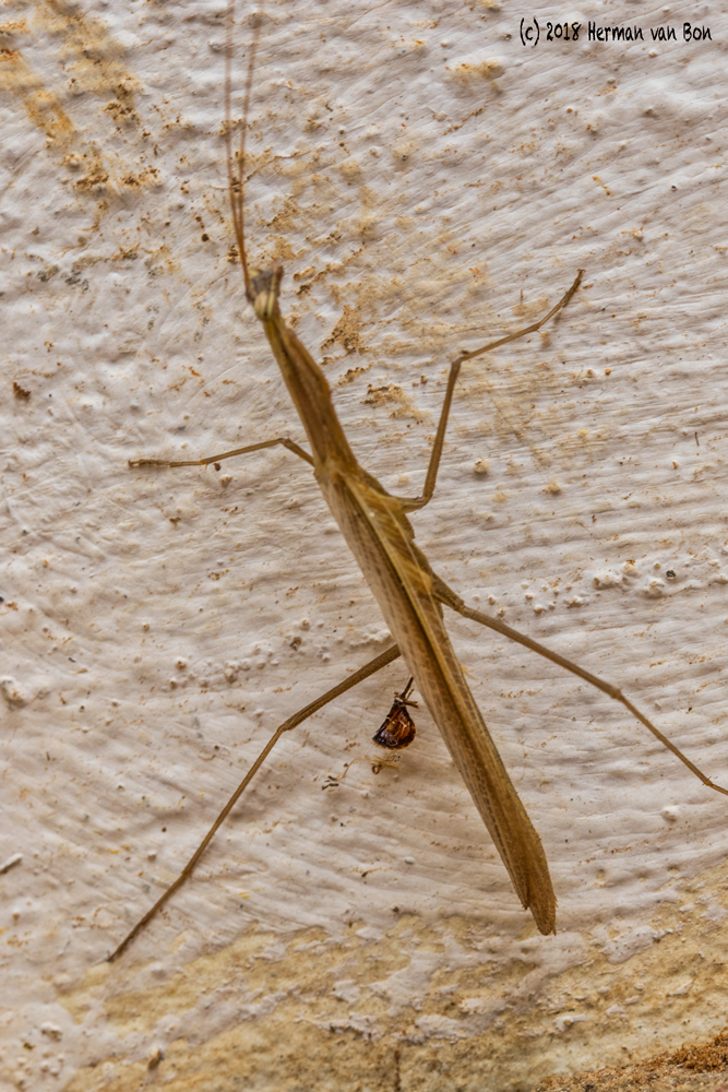 praying-mantis17jan18