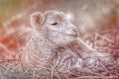 silence-of-the-lamb
