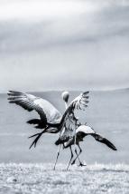 wings4u3