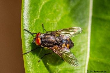 28jan18-fly