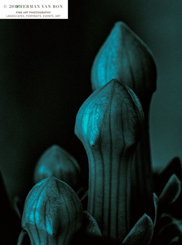 flower-bud-at-night