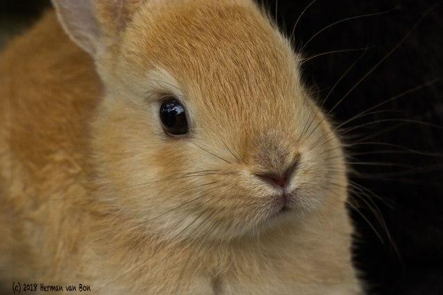 rabbit13