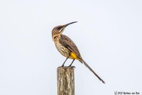 lookoutbird2