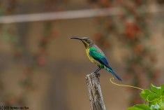 lookoutbird4