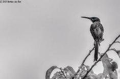 lookoutbird5