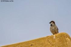 lookoutbird6
