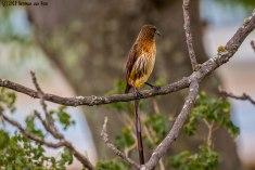 lookoutbird7