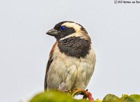 2feb18birdswatching2