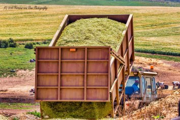 9oct18silage1