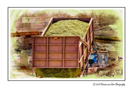 9oct18silage1a