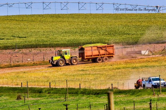 9oct18silage5