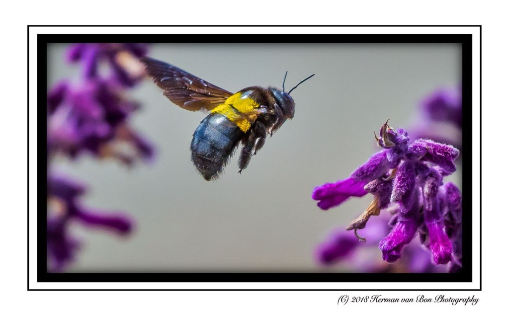 bumble bee approach