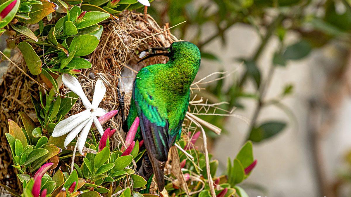 Courtyard birding
